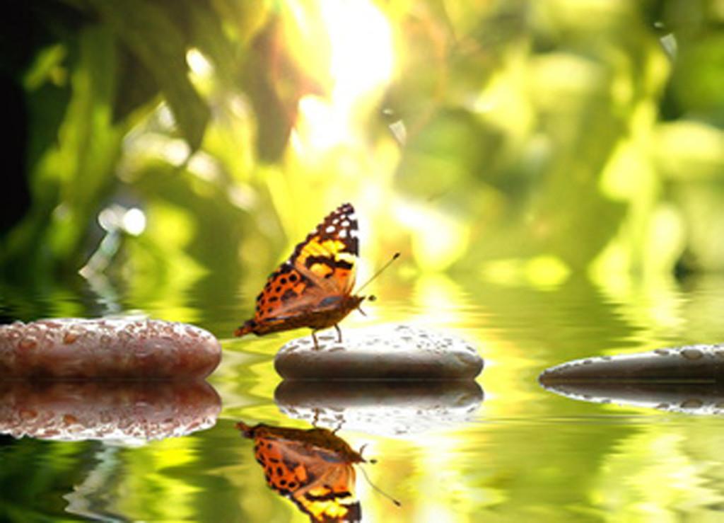 fond-papillon-deco-com-2014.jpg